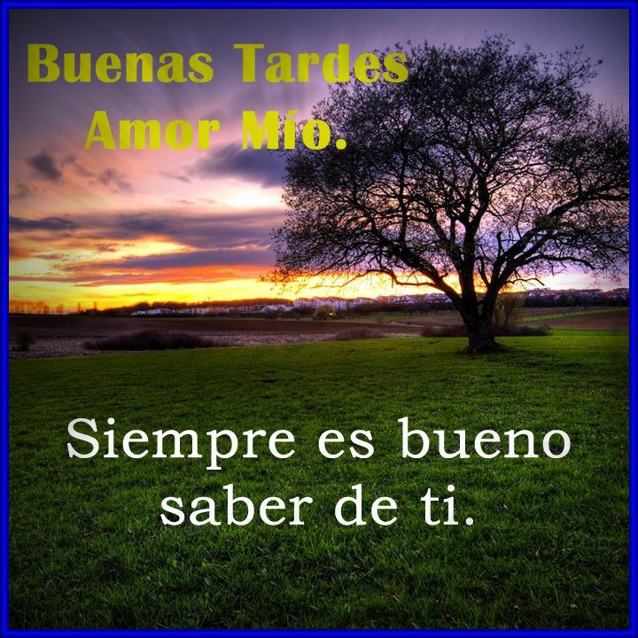 Buenas Tardes Imagenes Mensajes Fotos Gifts Y Frases