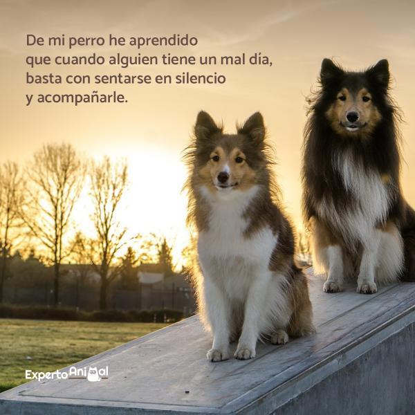 Frases De Amor Para Mascotas Cortas Y Largas Para Perros Y Gatos